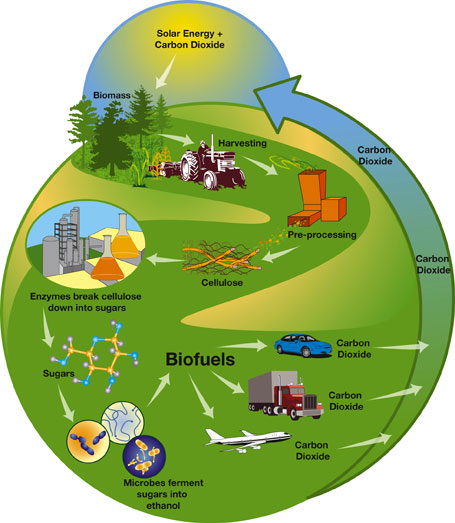 Bioenergy: Refueling the Future